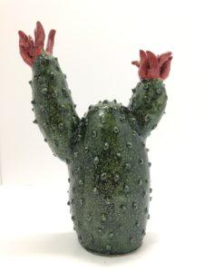 cactus spinato infiorescenza rossa